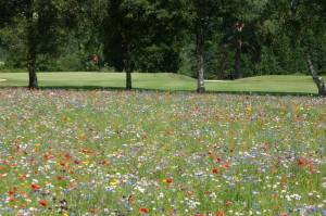 1890 Lamberhurst Golf Club
